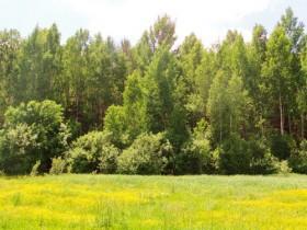 2017 год объявлен в Башкортостане Годом экологии и особо охраняемых природных территорий